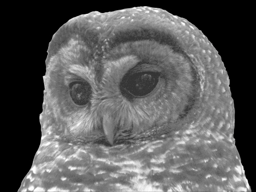 The God Squad and the Case of the Northern Spotted Owl