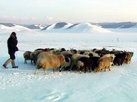 Warming Up in Mongolia