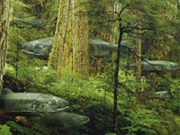 The Salmon Forest - image